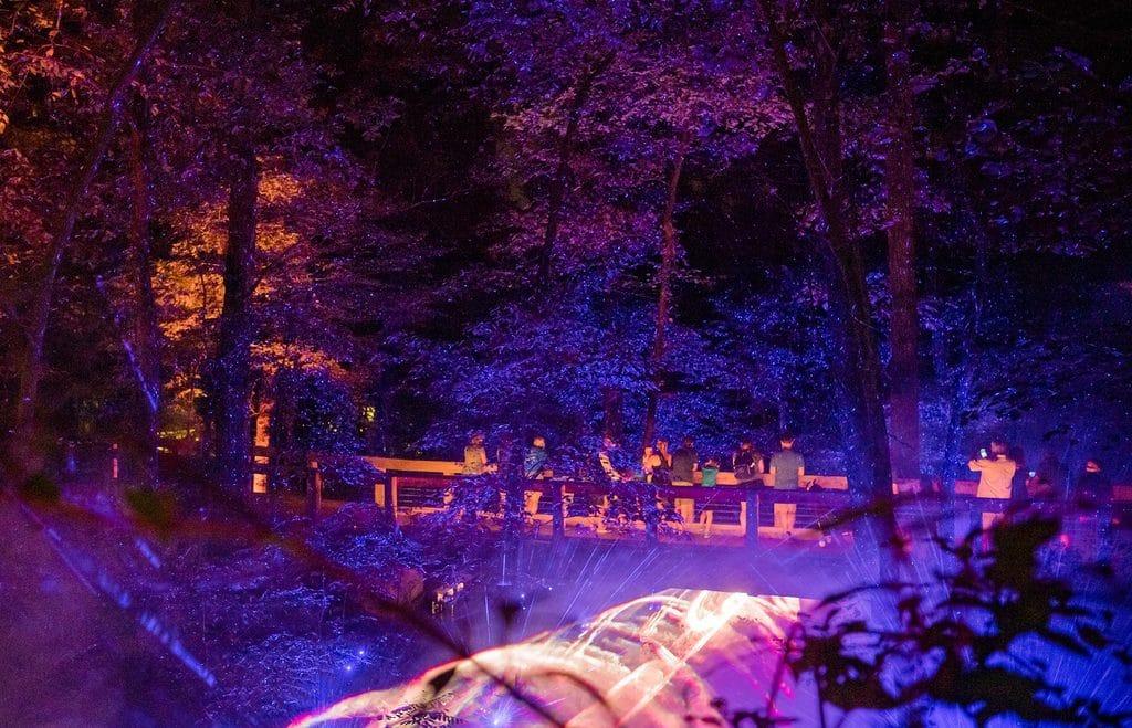 Crystal Bridges North Forest Lights